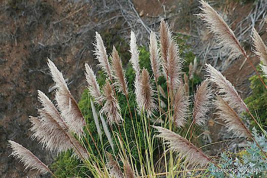 Coastal Californal Plantlife by Jonathan Jackson Coe