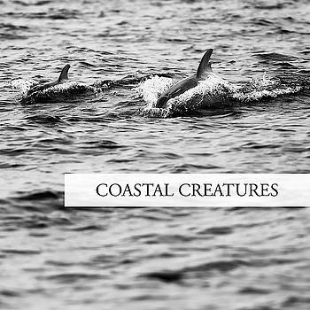 Coastal Creatures by Rob D Imagery