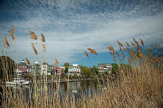 Coastal Spring by Karol Livote
