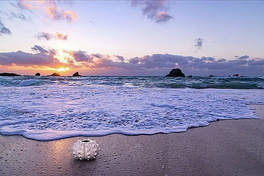 Coastal Sunrise Sea Urchin  by Betsy Knapp