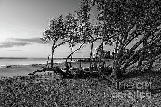 Coastal Wind Shaped Beach Tree's by Dale Powell