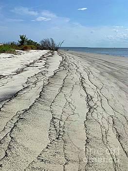 Coastline of Jekyll Island  by Linda Covino