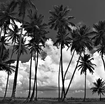 Coconut trees at Mayaro by Trinidad Dreamscape