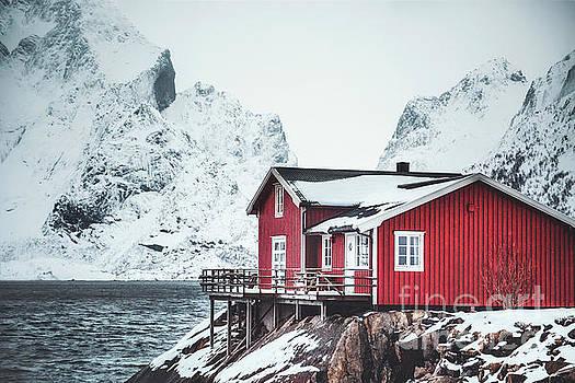 Cold Days. Warm Hearts. by Evelina Kremsdorf
