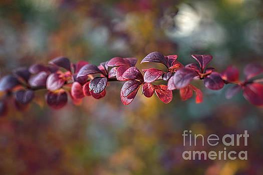 Color Me Autumn by Susan Warren