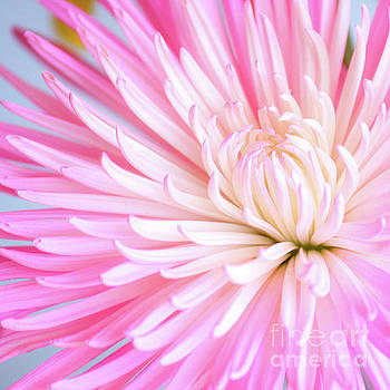 Color Me Pink by Kristi Cromwell