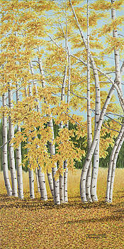 Colorado Aspens by Mary Ann King