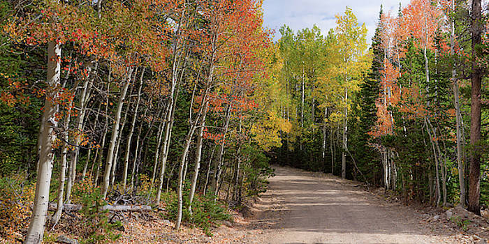 James BO Insogna - Colorado Autumn Reds Back-country Road Panoramic View