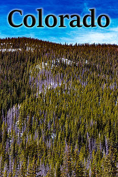 Colorado Forested Hillside by G Matthew Laughton