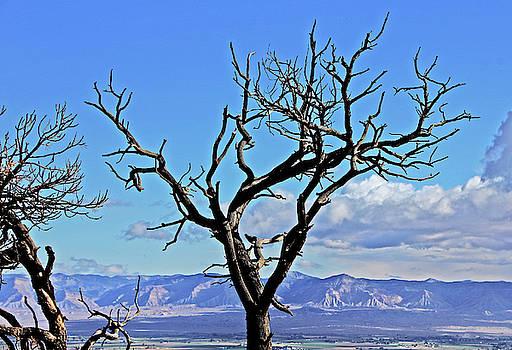 Colorado National Monument Colorado Blue Sky Red Rocks Clouds Trees 2 10212018 2842.jpg by David Frederick