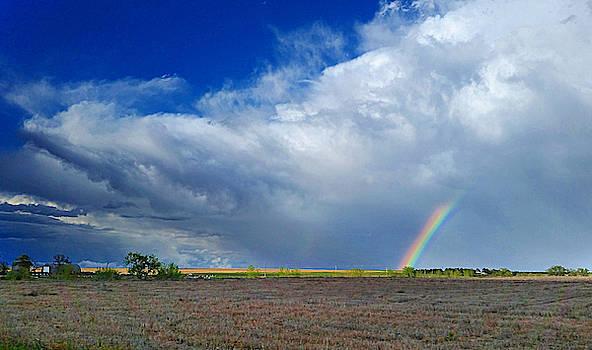 Colorado Rainbow  by Ally White
