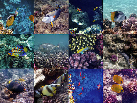 Johanna Hurmerinta - Colorful And Exotic Red Sea Underwater Collage