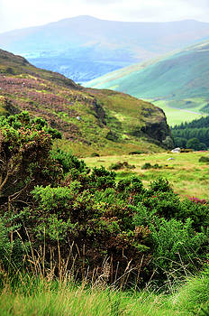 Jenny Rainbow - Colorful Autumn in Wicklow. Green Bushes