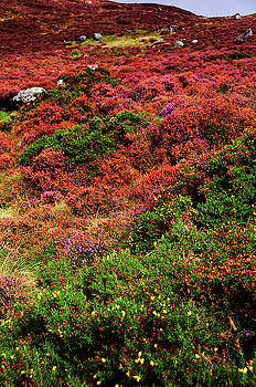 Jenny Rainbow - Colorful Autumn in Wicklow.  Red Hills