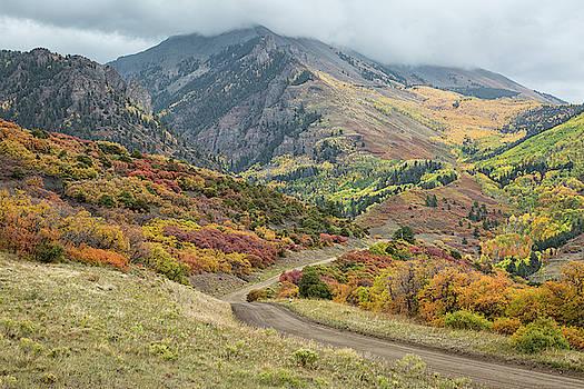 Colorful Autumn Oak Brush by Denise Bush
