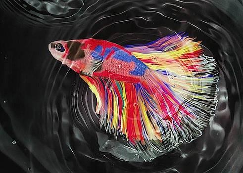 Colorful Beta fish by Ronni Dewey