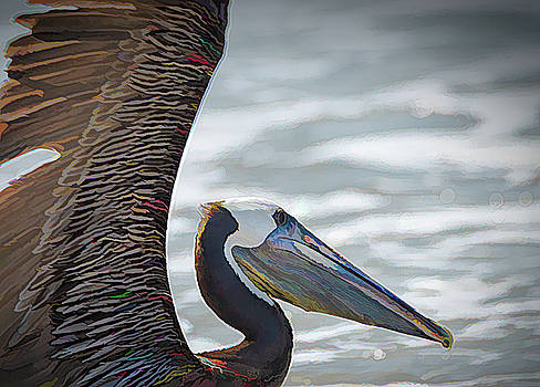 Colorful Brown Pelican by Debra Martz