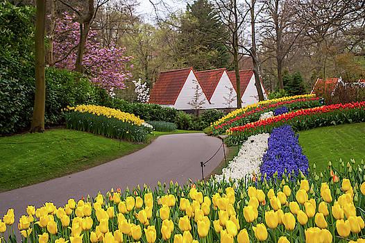 Jenny Rainbow - Colorful Stripes of Keukenhof Garden