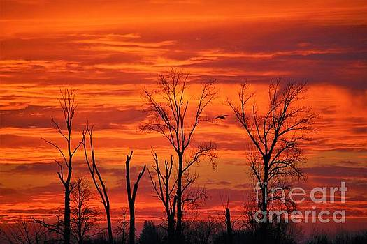 Colorful Sunrise Trees by Nick Gustafson