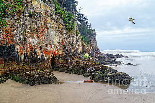 Colorful Ocean Cliff With Moss And Lichens by Robert C Paulson Jr