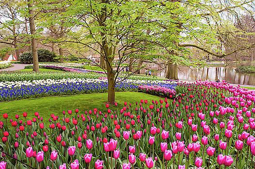Jenny Rainbow - Colorful Tulips Fields of Keukenhof