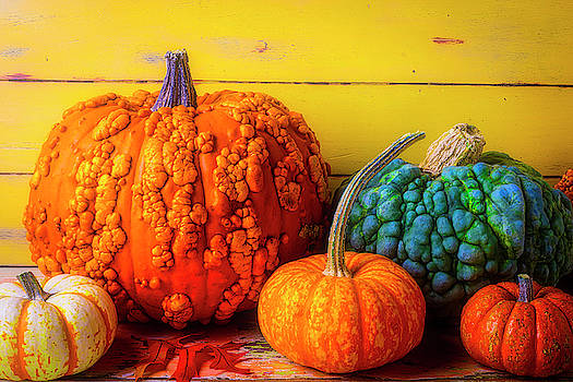 Colorful Warty Pumpkin Still Life by Garry Gay