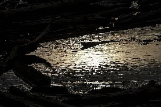 Tom Trimbath - Colorless Tide