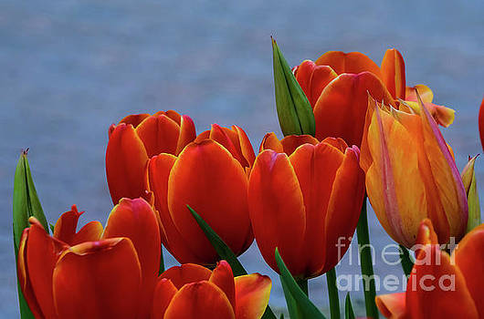Colors by Diana Mary Sharpton