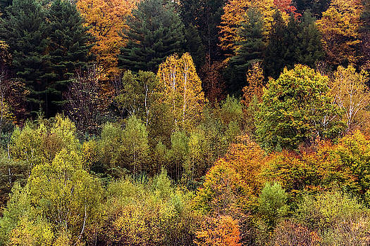 Terry DeLuco - Colors Of Autumn 2