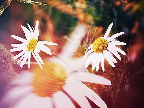 Colors of Garden by Jaroslav Buna
