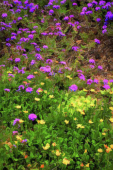 Colors Of Spring by Robert Meyerson
