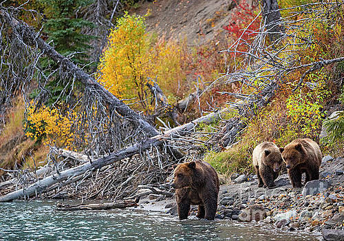 Color On The Creek by Aaron Whittemore
