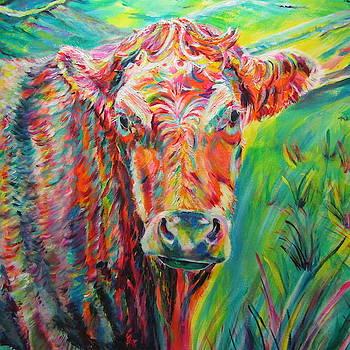 Colourful Charolais by Karin McCombe Jones