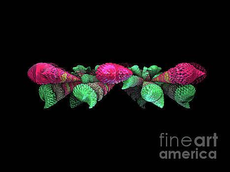 Colourful Shells by Lynn Bolt