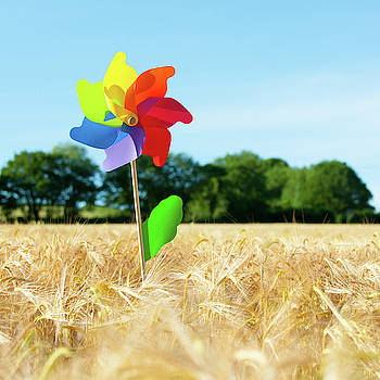 Colourful Windmill in a field of Corn by Helen Northcott