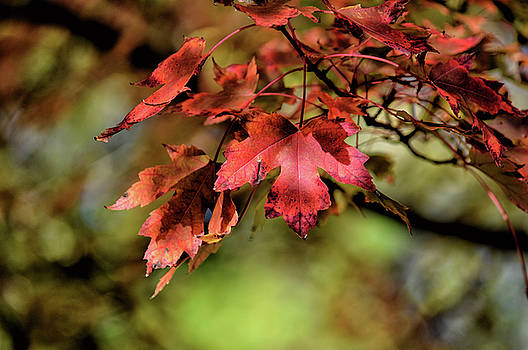 Colours Turning by Maria Keady