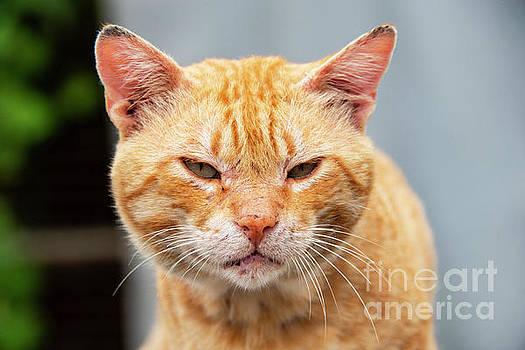 Bob Phillips - Community Tabby Cat