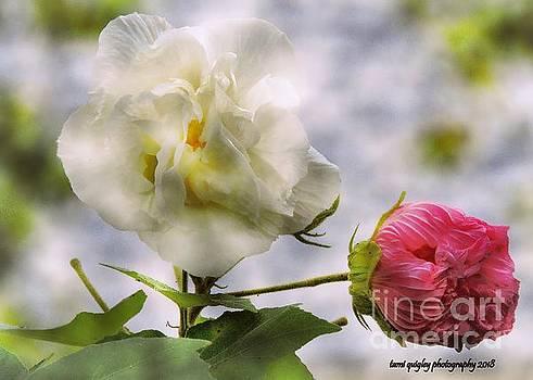 Tami Quigley - Confederate Roses