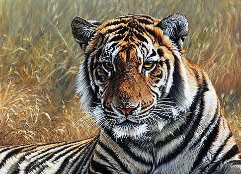 Contemplation - Tiger Portrait by Alan M Hunt