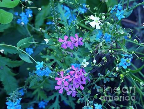 Cool Bouquet by Rosanne Licciardi