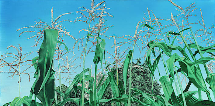 Cooley's Corn by D A Brown
