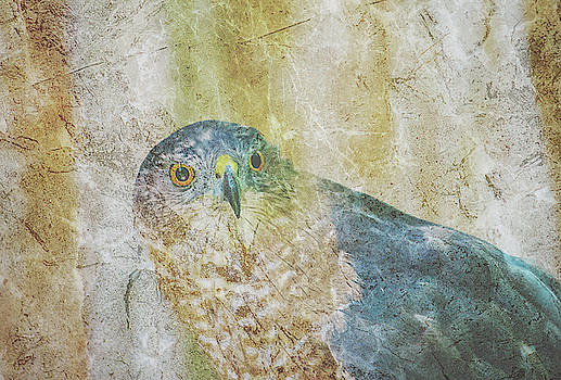 Coopers Hawk Cross Hatch Overlay by Keith Smith