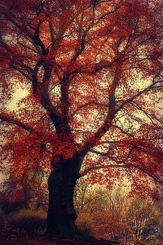 Copper Beech Tree by Dirk Wuestenhagen