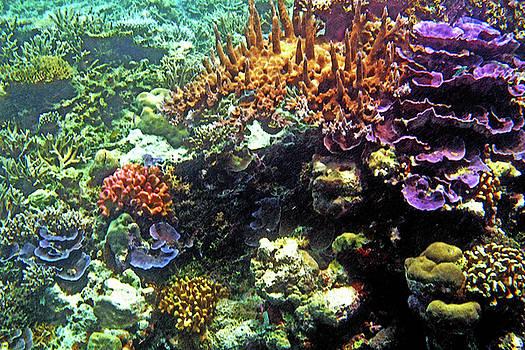 Susan Burger - Coral Garden
