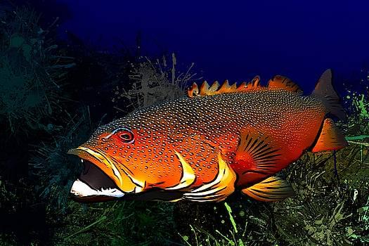 Coral Grouper Portrait by Scott Wallace Digital Designs