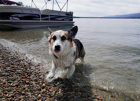 Corgi Loves The Water - Swan Lake, Montana by Mick Anderson