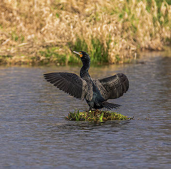 Cormorant on Tiny Island by Marv Vandehey