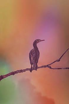 Cormorant Rainbow by Mitch Spence