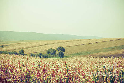 Cornfields by Claudia M Photography