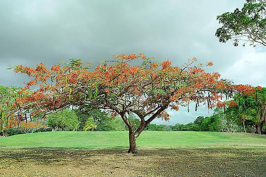 Coronado 18th Green Tree by Jackson Ball